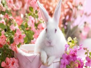 Conejo blanco entre flores rosas