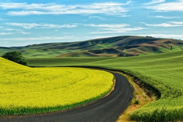 Carretera en un campo verde