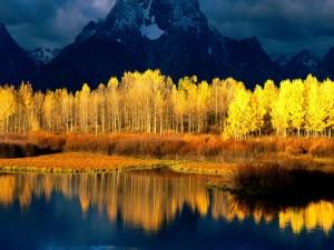Árboles amarillos entre las montañas y un lago