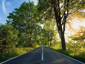 Postal: Carretera de doble sentido entre árboles