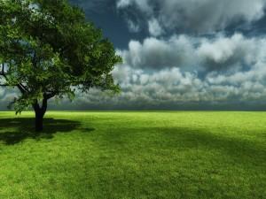 Árbol en una pradera verde