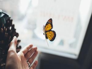 Mano intentando acariciar a una mariposa