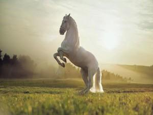 Caballo blanco de pie en un campo iluminado por la luz del sol