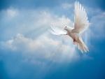 Paloma blanca flotando en el cielo