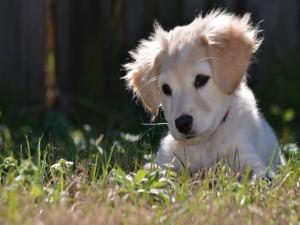 Pequeño cachorro tumbado en la hierba
