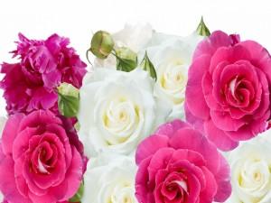 Rosas y peonías