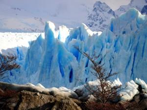 Árboles que crecen junto a hielos eternos