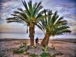 Pareja entre dos palmeras contemplando el mar
