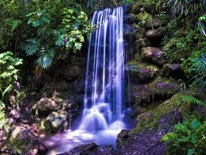 Flujo de agua cayendo entre la espesura del bosque