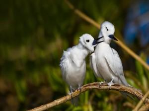 Pájaro molestando a su compañero de rama