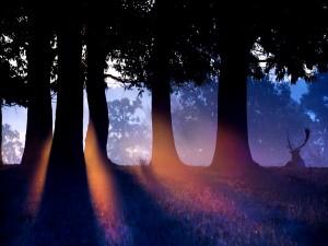 Ciervo tumbado junto a unos árboles al amanecer