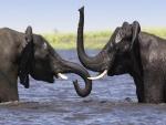 Dos elefantes dándose un baño