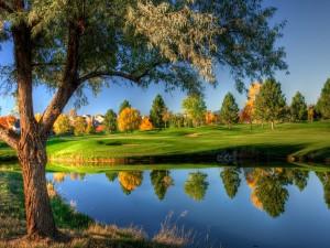 Árboles reflejados en un pequeño lago