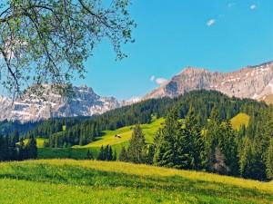 Bosque verde bajo las montañas