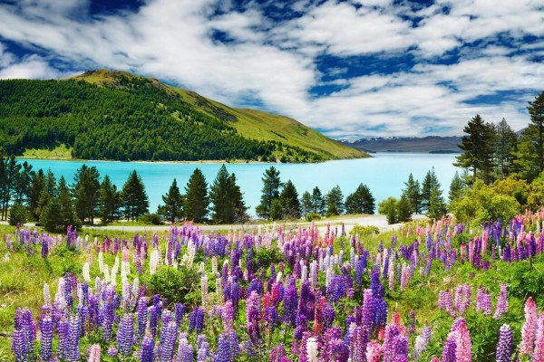 Hermosas flores junto a un lago