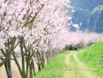 Hilera de árboles en flor