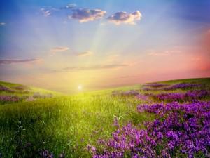 Un bonito sol iluminando el campo