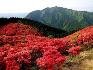 Árboles rojos junto a una montaña verde
