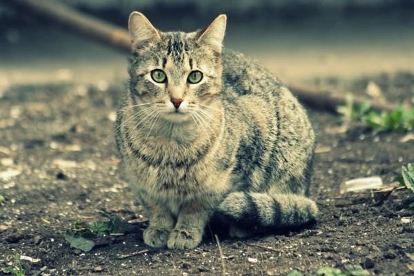 Un gato mirándote con sus lindos ojos verdes