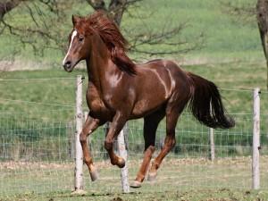 Caballo marrón en el aire