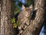 Gatito gris en un árbol