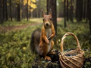 Una ardilla comiendo pipas de una cesta