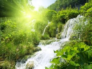 Plantas verdes junto a una cascada