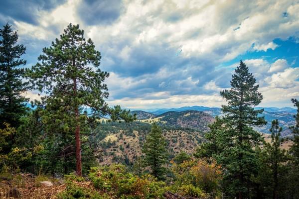 Cielo nuboso sobre los pinos