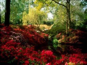 Plantas y árboles junto a un estanque
