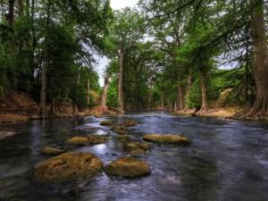 Grandes árboles a orillas de un río