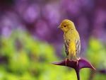 Pájaro posado en una flor morada