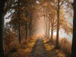 Camino entre árboles otoñales