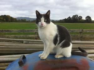Gato blanco y negro sentado en una placa oxidada