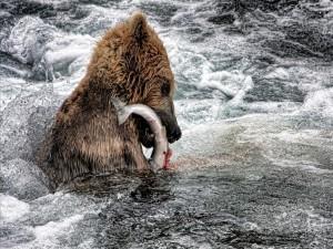 Oso dentro de un río con un pez en la boca