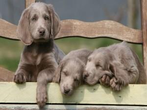 Tres lindos cachorros