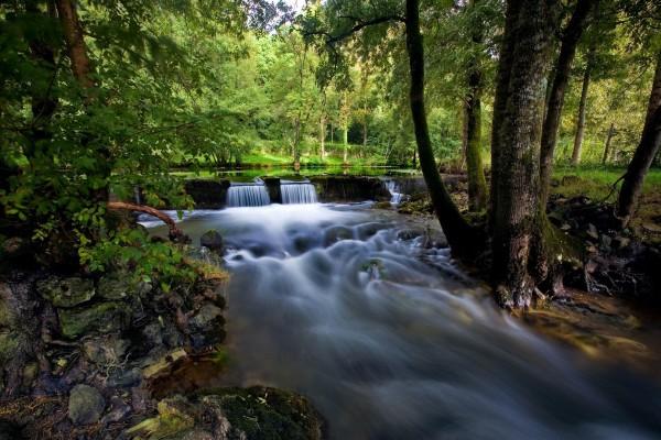 Cauce de un río entre los árboles del bosque