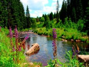 Flores y plantas a orillas de un río