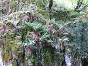 Helechos y árboles en una pared de roca
