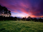 Amanecer visto desde el campo verde