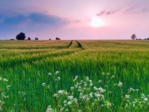 Sol entre nubes iluminando un campo verde