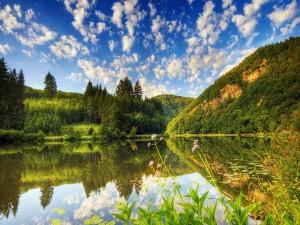 Nenúfares en un lago en calma
