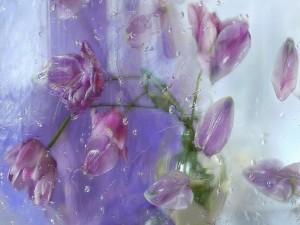 Ramo de tulipanes rosas detrás de una ventana con gotas de lluvia