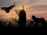 Lobos y un cuervo acechando al anochecer