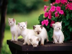 Camada de gatitos blancos en un jardín
