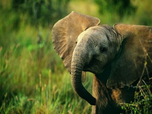 Bebé elefante entre la hierba