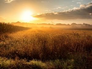 Deslumbrantes rayos de sol iluminan el campo