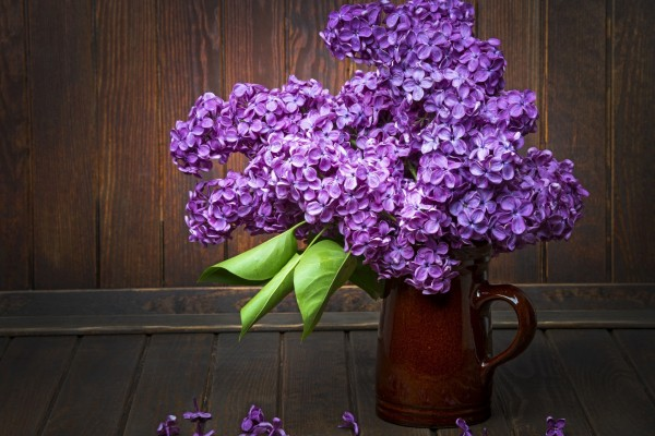Un florero con lilas