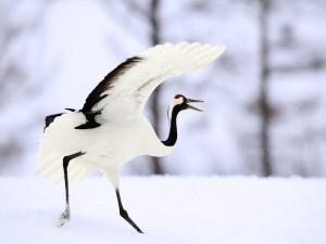 Garza caminando sobre la nieve
