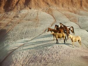 Caballos contemplando el paisaje desde un paraje rocoso
