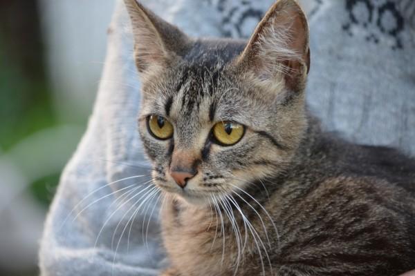 Un bonito gato con largos bigotes